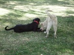 dogs latin america nibble