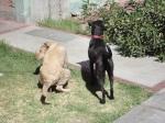dogs latin america pooping