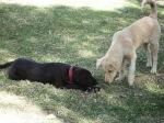 dogs latin america share
