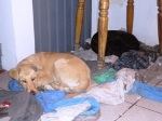 dogs latin america sleeping roof