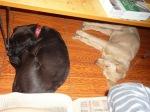 dogs latin america sleeping sala 2