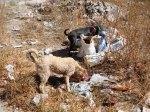 dogs latin america trash