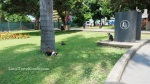 Parque Kennedy cats