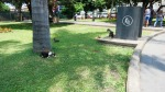 parque kennedy miraflores lima peru cats