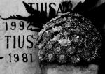 central cemetery bogota colombia historiasvisuales 2